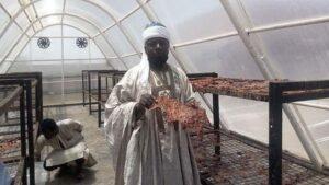 Solar powered kilishi processing system